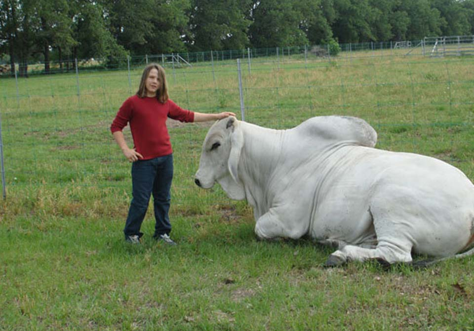 Salinas Ranch gray brahman gallery kid and bull