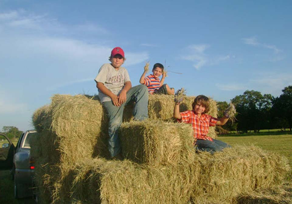 Salinas Ranch gray brahman gallery kids on hay